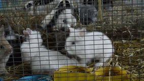 Leuke kleine konijnen stock video