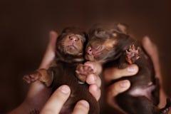 Leuke kleine pasgeboren jongen die samen met haar liggen Stock Fotografie