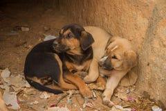 Leuke kleine puppy Royalty-vrije Stock Foto