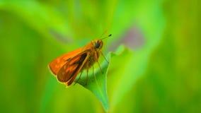 Leuke kleine vlinder op het blad royalty-vrije stock foto's