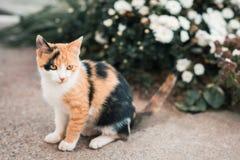 Leuke kleurrijke pussycat in tuin royalty-vrije stock afbeeldingen