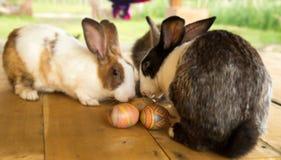 Leuke konijntje en paaseieren Royalty-vrije Stock Fotografie