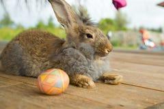 Leuke konijntje en paaseieren in de tuin Royalty-vrije Stock Afbeelding