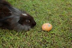Leuke konijntje en paaseieren in de tuin Royalty-vrije Stock Foto