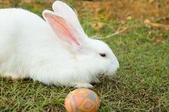 Leuke konijntje en paaseieren in de tuin Royalty-vrije Stock Foto's
