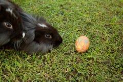 Leuke konijntje en paaseieren in de tuin Stock Foto
