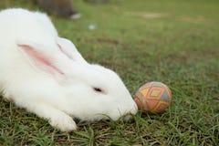 Leuke konijntje en paaseieren in de tuin Royalty-vrije Stock Afbeeldingen