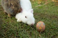 Leuke konijntje en paaseieren in de tuin Stock Afbeeldingen