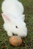 Leuke konijntje en paaseieren in de tuin Stock Fotografie