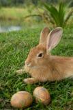 Leuke konijntje en paaseieren in de tuin Stock Foto's