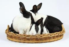 Leuke konijntjes stock foto's