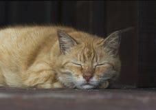 Leuke luie kat op de vloer stock foto's