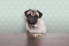 Leuke meelijwekkende pug puppyhond op een nr-zitting van het carburatorendieet bij houten lijst met snacks vooraan stock afbeelding