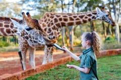 Leuke meisje voedende giraffen in Afrika Royalty-vrije Stock Afbeeldingen