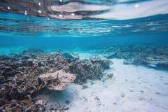 Leuke mening van weinig vis die onder koraal verbergen snorkeling Onderwaterwereld van Indische Oceaan royalty-vrije stock foto's
