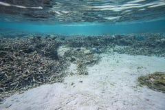Leuke mening van weinig vis die onder koraal verbergen snorkeling Onderwaterwereld van Indische Oceaan royalty-vrije stock foto