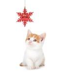 Leuke Oranje en Witte Kitten Playing met een Kerstmisornament o stock afbeeldingen
