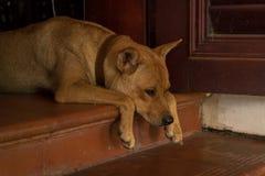 Leuke Oranje Hondzitting op Drempel in Bizarre Positie - Bored Puppy - Analoog Kleurenschema royalty-vrije stock afbeeldingen