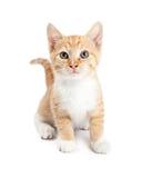 Leuke Oranje Tabby Kitten Isolated op Wit Stock Foto