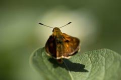 Leuke oranje vlinder op blad op groene achtergrond Stock Foto