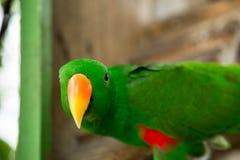 Leuke papegaaivogel Royalty-vrije Stock Fotografie