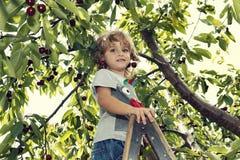 Leuke peuter die zich op een ladder bevinden en kersen op zijn oren dragen stock fotografie
