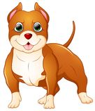 Leuke pitbullbeeldverhaal status Stock Foto's