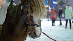 Leuke Poney in de Avond op de Straattribunes onder Dalende Sneeuw op de Kerstmismarkt in de Winter stock videobeelden