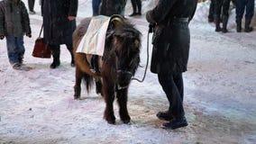 Leuke Poney in de Avond op de Straattribunes onder Dalende Sneeuw op de Kerstmismarkt in de Winter stock video