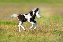 Leuke Pony Foal royalty-vrije stock afbeelding