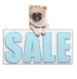 Leuke pug puppyhond die gebreide hoed voor de winterkoude dragen, die met poten op groot die verkoopteken hangen, op witte achter Stock Fotografie