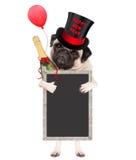 Leuke pug puppyhond die hoge zijden met tekst gelukkig nieuw jaar dragen, champagnefles en leeg die bordteken houden die, op wit  Stock Afbeeldingen