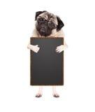 Leuke pug puppyhond met glazen, die opstaan houdend leeg bordteken en gevend a als met duim, die op witte backgro wordt geïsoleer Royalty-vrije Stock Afbeelding
