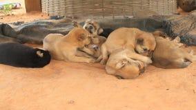 Leuke puppy stock video