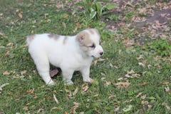 Leuke puppy Royalty-vrije Stock Foto