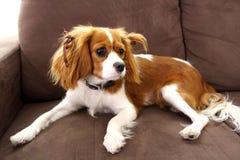 Leuke puppyhond Stock Foto's