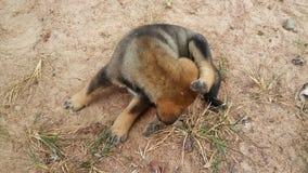 Leuke puppyhond die in openlucht ruiken Stock Foto