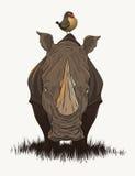 Leuke rinoceros Stock Afbeeldingen