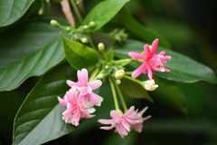 Leuke roze bloem royalty-vrije stock foto