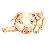 Leuke roze piggy legt Royalty-vrije Stock Foto's