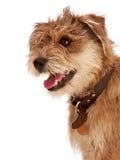 Leuke ruwharige hond met gelukkige uitdrukking. Stock Fotografie