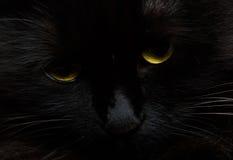 Leuke snuit van zwarte katten dichte omhooggaand Royalty-vrije Stock Afbeelding