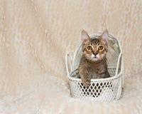 Leuke Tabby Kitten in Witte mand Royalty-vrije Stock Foto