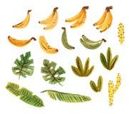 Leuke tropcal reeks met bananen, cactussen en bladeren Geïsoleerd op witte elementen die als achtergrond in gouache schilderen stock illustratie