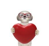 Leuke Valentine-hond in glazen met hart Royalty-vrije Stock Foto