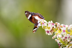 Leuke vlinder die zich op een tak bevinden Royalty-vrije Stock Afbeeldingen