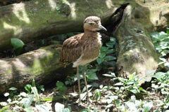 Leuke Vogel Royalty-vrije Stock Fotografie