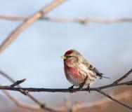 Leuke vogel op een tak Stock Foto