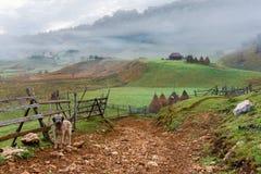 Leuke waakhond die ingang bewaken aan levendig en adembenemend afgelegen plattelandsgebied, Fundatura Ponorului, Roemeni? stock fotografie