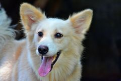 Leuke witte hond Royalty-vrije Stock Afbeelding
